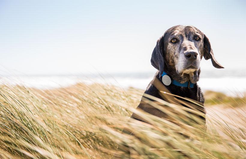 Collare per cani Whistle Activity Monitors