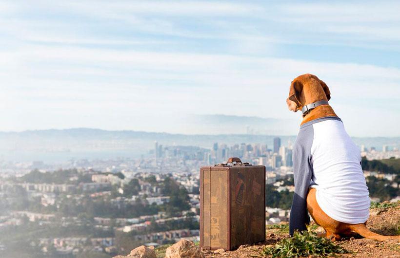 Collare Localizzatore GPS per cani e gatti. Trova il tuo amico a quattro zampe.